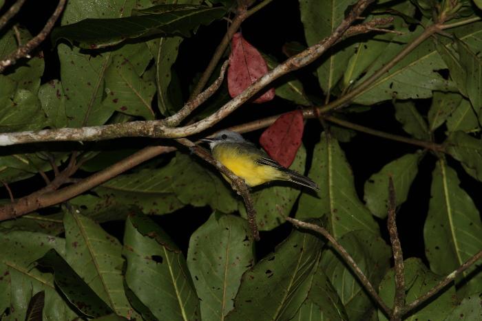 En las 129 manzanas de bosque tropical húmedo de la reserva privada El Quebracho existen una gran variedad de especies de flora y fauna. LA PRENSA/ CORTESÍA FUNDACIÓN DEL RÍO