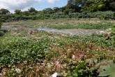 Micropresas llenas de basura y sedimento en Managua