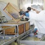 Se estancan exportaciones de miel