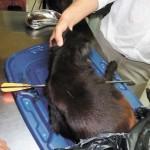 No cesa maltrato animal, envenenan perros en Managua