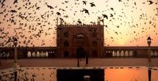 Pájaros vuelan sobre el corredor de la Jama Masjid al amanecer en Nueva Delhi. LA PRENSA/AFP