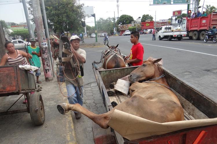 Protección animal, una materia pendiente en Nicaragua