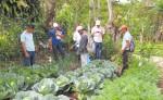 La producción de patio emprendida por familias rurales   fue  parte del Programa Agroambiental Mesoamericano (MAP, por sus siglas en inglés). LA PRENSA/CORTESÍA